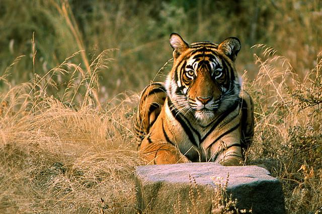 Khám phá công viên Safari World, Thái Lan