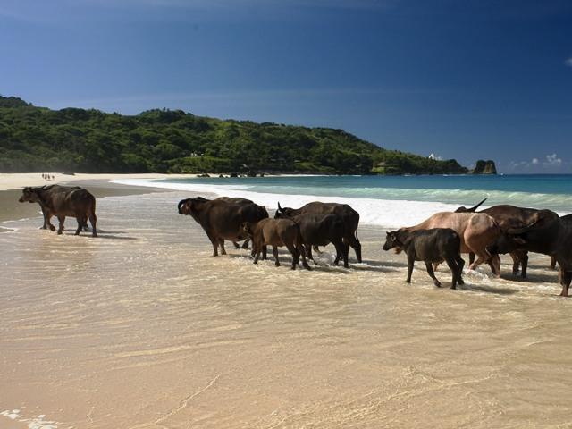 Sumba  hòn đảo ngọc mới của Indonesia