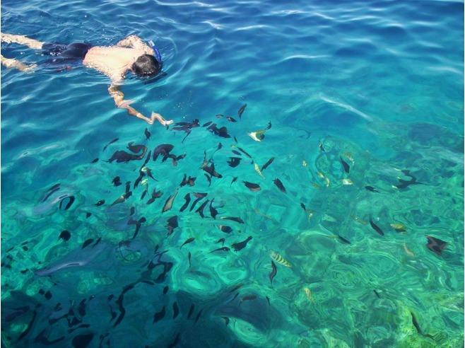 Ghé thăm thiên đường lặn biển ở Indonesia