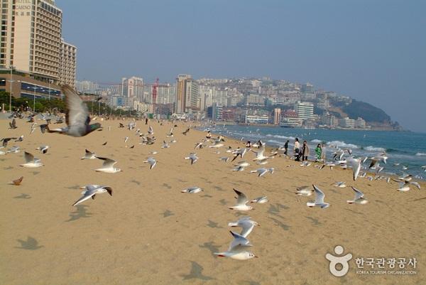 Haeundae bãi biển đẹp nhất Busan