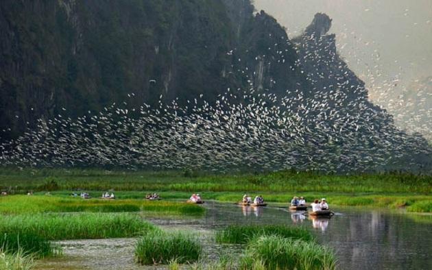 Tới thăm khu bảo tồn gấu trúc ở Tứ Xuyên