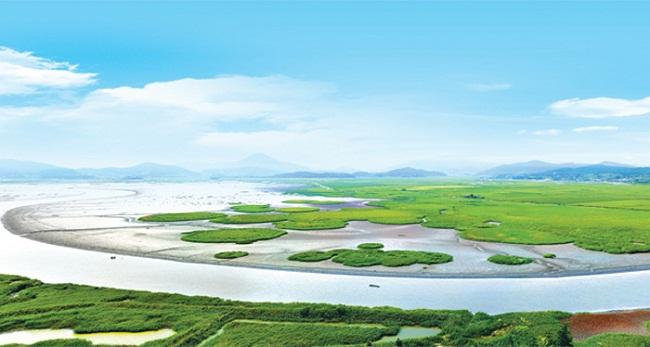Vẻ đẹp quyến rũ của vịnh Suncheon