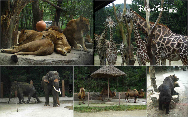 Khu Zoo topia tại Everland