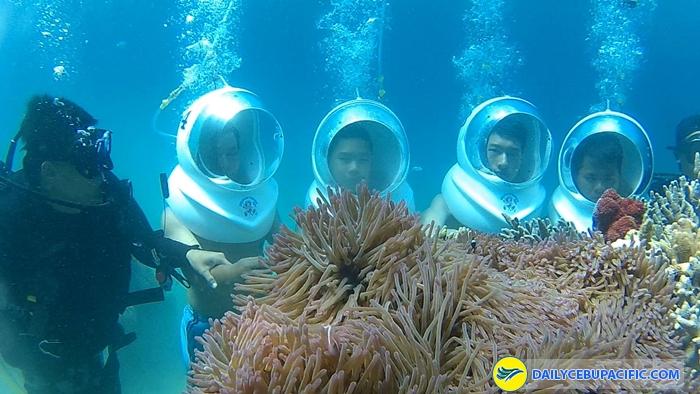 Khám phá thế giới dưới lòng đại dương ở Boracay